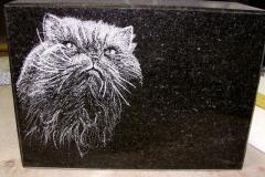 Looma portree hauakivil - kass