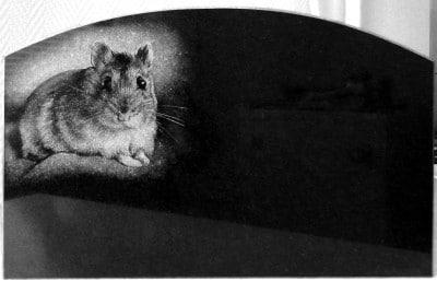 AARIAKIVI hauakivid looma portree graniidil hamster
